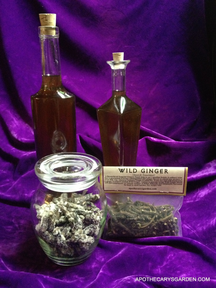 Candied Wild Ginger and Pancake Syrup from 50 grams dried Wild Ginger