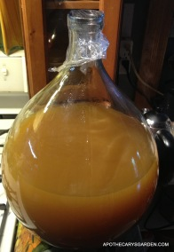 Dandelion Wine 2013 first racking of 14 liters to 20 liter carboy