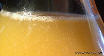 Dandelion Wine at Work-Primary Fermentation- 2013