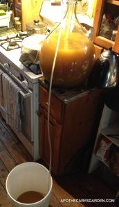 Dandelion Wine 2013-Racking back to bucket