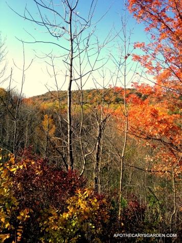 Wild Mushroom Hunt Gorgeous Fall colours Dundas escarpment
