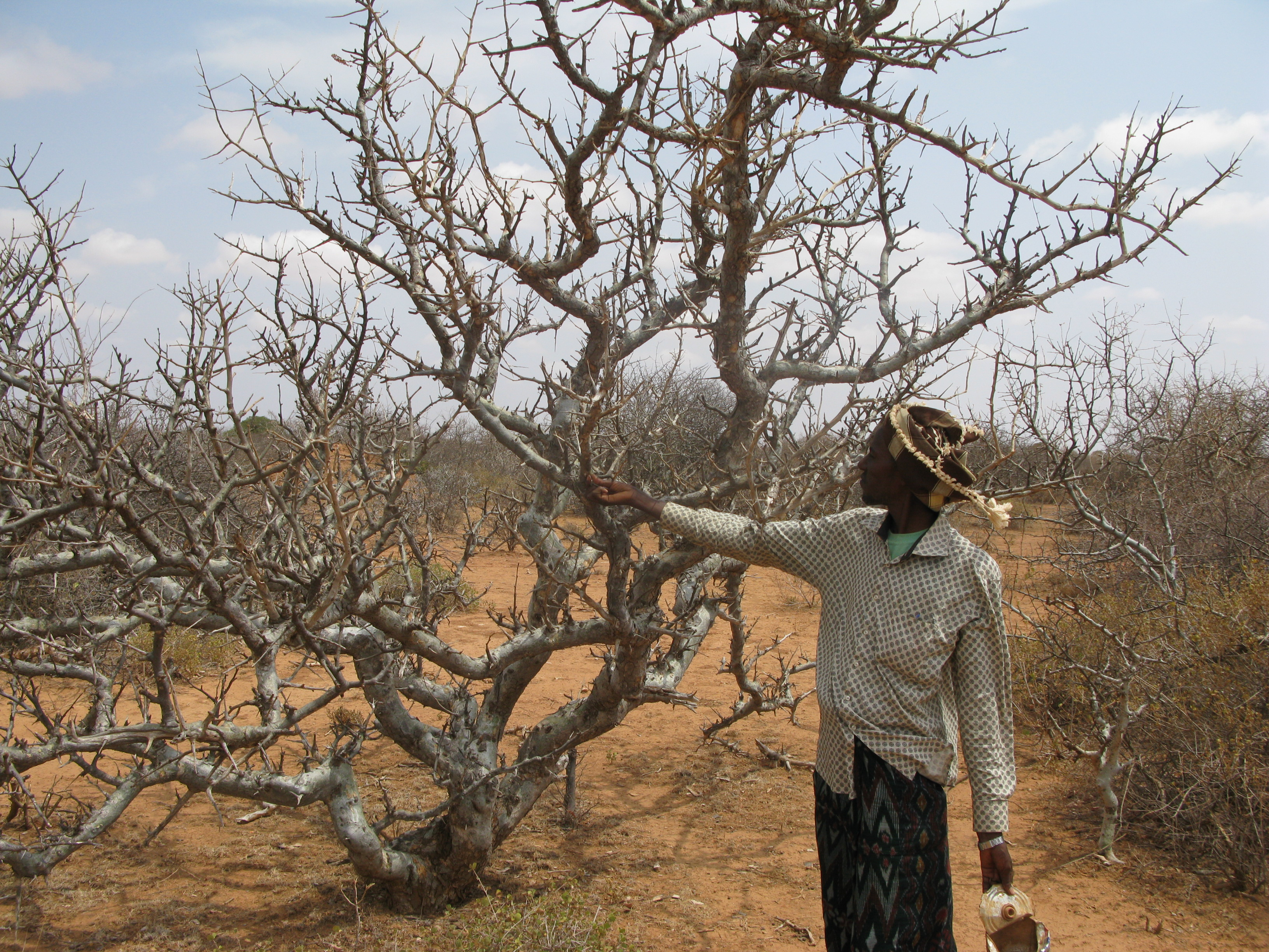 Co Ops Do We Support Ethical Frankincense Harvesting