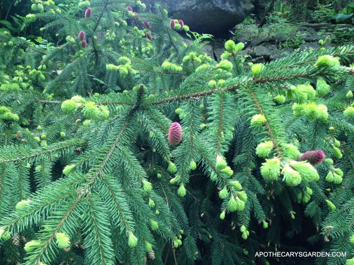 Spring Spruce 2013