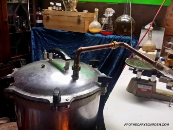 Pressure cooker pot still for essential oils