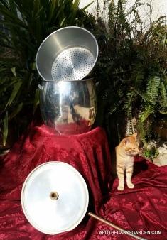 Couscousiere pot still with cat