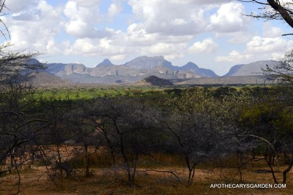 Commiphora, Boswellia and Acacia
