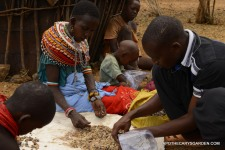 Sorting Frankincense Kenya 2016